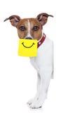 Hund des Gelbs nicht Lizenzfreies Stockbild