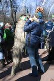 Hund des irischen Wolfshunds und sein Eigentümer an der St- Patrick` s Tagesfeier in Moskau Stockbilder