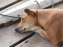 Hund des süßen Traums Stockbild