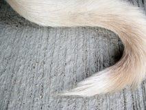 Hund des weißen Schwanzes auf Boden Lizenzfreies Stockfoto
