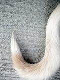 Hund des weißen Schwanzes auf Boden Stockbilder