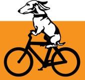 Hund des Wiener Würstchens, der Fahrrad fährt Lizenzfreies Stockbild