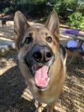 Hund 14 stockfotos
