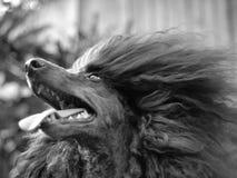 Hund draußen Lizenzfreies Stockfoto