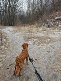 Hund draußen lizenzfreies stockbild