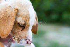 Hund draußen Lizenzfreie Stockbilder