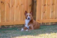 Hund durch Zaun Stockbild