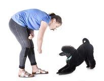 Hund, Eigentümer und Gehorsam stockbild