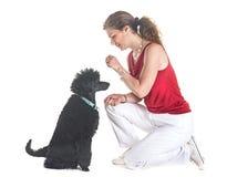 Hund, Eigentümer und Gehorsam stockfoto