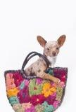 Hund in einem Beutel Lizenzfreie Stockfotos