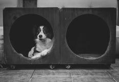Hund in einem Cubby Stockfotos