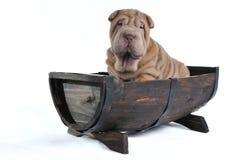 Hund in einem Faß stockfotografie