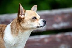 Hund in einem Garten lizenzfreies stockfoto