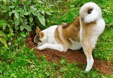 Hund in einem Garten. Stockbilder