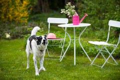 Hund in einem Garten Stockfotos