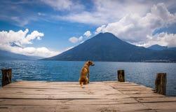 Hund in einem hölzernen Pier am Atitlan See Stockfoto