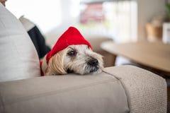 Hund in einem Hoodie lizenzfreies stockbild