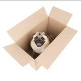Hund in einem Kasten. Stockbilder