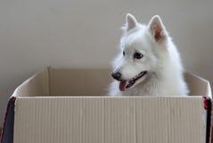 Hund in einem Kasten Lizenzfreie Stockfotografie