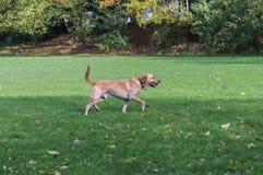 Hund in einem Park Stockfotos