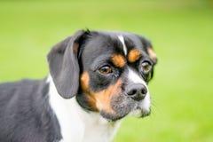 Hund in einem Park Lizenzfreie Stockfotos