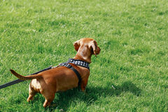 Hund in einem Park lizenzfreie stockbilder