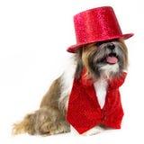 Hund in einem roten Partei-Kostüm Stockfoto
