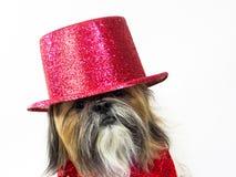 Hund in einem roten Zylinder Lizenzfreies Stockfoto