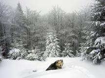 Hund in einem schneebedeckten Wald Stockfotografie