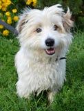 Hund in einem Schutz Lizenzfreies Stockbild