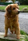 Hund in einem Schutz lizenzfreies stockfoto