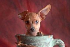 Hund in einem Topf Stockbild