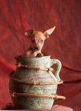Hund in einem Topf Stockfotos