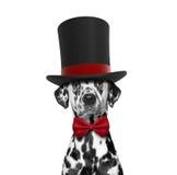 Hund in einem Zylinder und einer Krawatte des hohen Hutes stockfoto