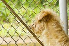 Hund einer Lizenzfreies Stockfoto