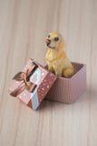Hund in einer Geschenkbox lizenzfreie stockfotos