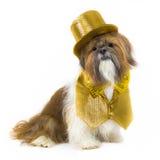Hund in einer GoldPartei-Ausstattung Lizenzfreies Stockfoto