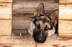 Hund in einer Hundehütte Lizenzfreies Stockbild