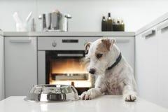 Hund in einer Küche Stockfoto