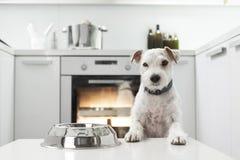 Hund in einer Küche Stockbild