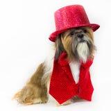 Hund in einer roten Partei-Ausstattung Stockfotos