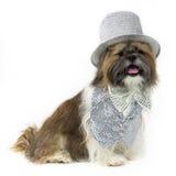 Hund in einer silbernen Partei-Ausstattung Lizenzfreie Stockfotos
