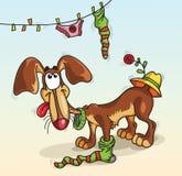 Hund in einer Socke Lizenzfreie Stockbilder