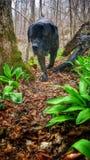 Hund in einer Wanderung Lizenzfreie Stockfotos