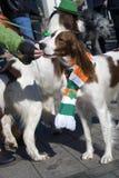 Hund empfängt Lebensmittel von seinem Eigentümer an der St- Patrick` s Tagesfeier in Moskau Stockfotos