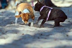 Hund`en s gräver hål från sand royaltyfria foton