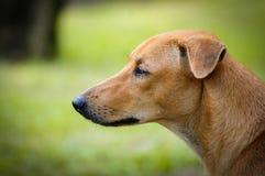 Hund entmutigt Lizenzfreies Stockbild