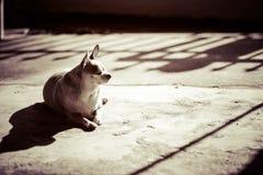 Hund entspannen sich jpg Stockfoto