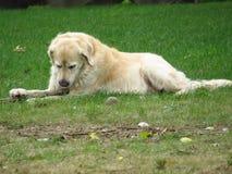 Hund erhielt einen Knochen Stockfoto