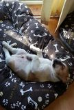 Hund ermüdete lizenzfreie stockfotografie